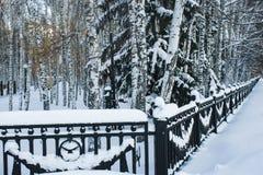 Alberi nella neve nel parco Fotografia Stock Libera da Diritti