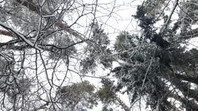 Alberi nella neve nell'inverno stock footage