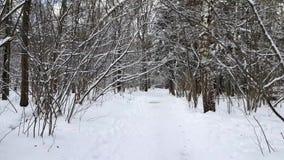 Alberi nella neve nell'inverno video d archivio