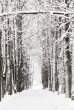 Alberi nella neve un giorno di inverno Fotografie Stock
