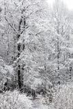 Alberi nella neve un giorno di inverno Immagine Stock