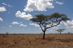 Alberi nella regione selvaggia Fotografia Stock
