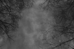 Alberi nella riflessione, bianco e nero Fotografia Stock Libera da Diritti
