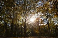 Alberi nella stagione di autunno Immagine Stock Libera da Diritti
