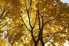 Alberi nella stagione di autunno Immagini Stock Libere da Diritti