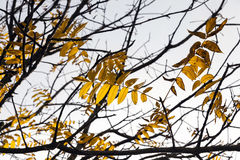 Alberi nella stagione di autunno Fotografia Stock