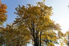 Alberi nella stagione di autunno Fotografie Stock Libere da Diritti