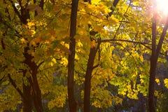 Alberi nella stagione di autunno, foglie di autunno fotografie stock libere da diritti