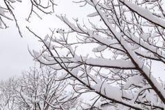 Alberi nella stagione di inverno fotografia stock libera da diritti
