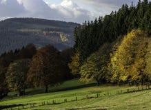 Alberi nella stagione Sauerland Germania di autunno Immagini Stock Libere da Diritti