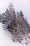 Alberi nelle alpi svizzere sotto precipitazioni nevose pesanti - 3 Immagini Stock