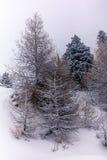 Alberi nelle alpi svizzere sotto precipitazioni nevose pesanti - 1 Fotografie Stock Libere da Diritti