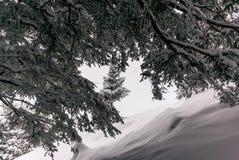 Alberi nelle alpi svizzere sotto precipitazioni nevose pesanti - 21 Immagini Stock