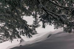 Alberi nelle alpi svizzere sotto precipitazioni nevose pesanti - 20 Immagini Stock Libere da Diritti