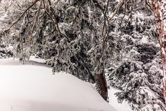 Alberi nelle alpi svizzere sotto precipitazioni nevose pesanti nell'inverno - 9 Fotografie Stock Libere da Diritti