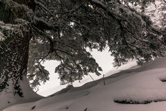 Alberi nelle alpi svizzere sotto precipitazioni nevose pesanti nell'inverno - 15 Fotografia Stock Libera da Diritti