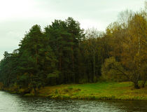 Alberi nelle foreste Fotografia Stock Libera da Diritti