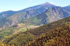 Alberi nelle montagne Fotografie Stock