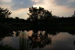 Alberi nello scuro con la sua ombra nel lago fotografia stock
