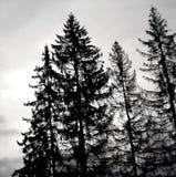 Alberi neri Fotografia Stock Libera da Diritti