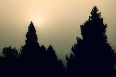 Alberi neri di alba Fotografia Stock
