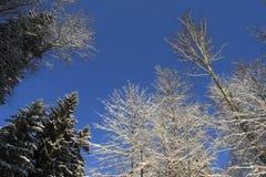 Alberi, neve e cielo fotografia stock