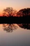 Alberi nudi al tramonto Fotografia Stock