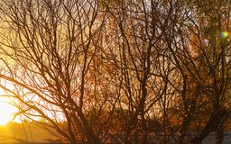 Alberi nudi in autunno a tempo di tramonto fotografia stock libera da diritti