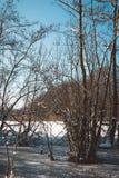 Alberi nudi che crescono in Forest Wetland Lake congelato Fotografia Stock