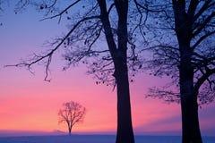 Alberi nudi di inverno all'alba fotografia stock libera da diritti