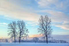 Alberi nudi di inverno all'alba immagini stock