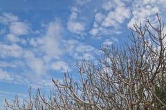 Alberi nudi di inverno in cielo blu Immagini Stock Libere da Diritti