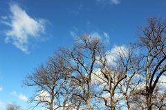 Alberi nudi di inverno in parco rurale fotografie stock
