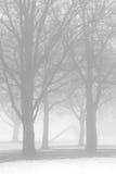 Alberi nudi in nebbia di inverno Immagine Stock
