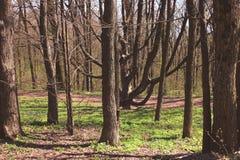 Alberi nudi nel parco di primavera Fotografia Stock Libera da Diritti