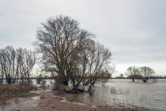 Alberi nudi nell'acqua di un fiume Immagini Stock Libere da Diritti