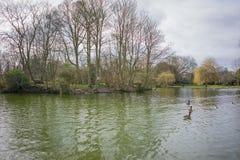 Alberi nudi per appoggiare terra, priorità alta del lago Immagini Stock