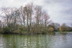 Alberi nudi per appoggiare terra, priorità alta del lago Fotografia Stock