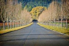 Alberi nudi, strada campestre del vino, California Fotografie Stock Libere da Diritti