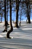 Alberi, ombre e neve Immagine Stock Libera da Diritti