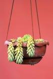 Alberi ornamentali sul cestino sulla parete. Fotografie Stock Libere da Diritti