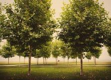 Alberi in parco Fotografia Stock Libera da Diritti