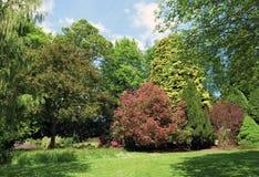 Alberi in parco Immagine Stock