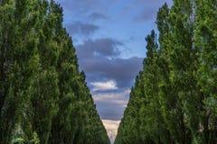 Alberi in parco Immagini Stock