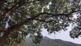 Alberi in parco nazionale Fotografia Stock Libera da Diritti