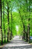 Alberi in parco vicino al posto della cattedrale nella città di Vilnius Immagine Stock