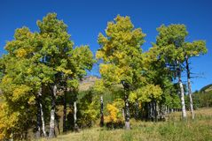 Alberi in pecore River Valley immagini stock libere da diritti