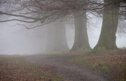 Alberi in percorso del alkong della nebbia Fotografie Stock Libere da Diritti