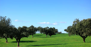Alberi in pianura di Alentejo. Fotografie Stock