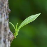 Piccola crescita degli alberi Fotografie Stock